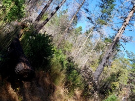 191005 Gunsight Rock Trail 1
