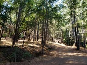 191017 Annadel Robertson Trail