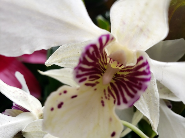 Phipps Orchids 1