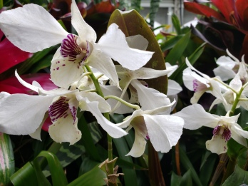Phipps Orchids 2