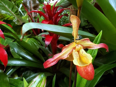 Phipps Orchids 4