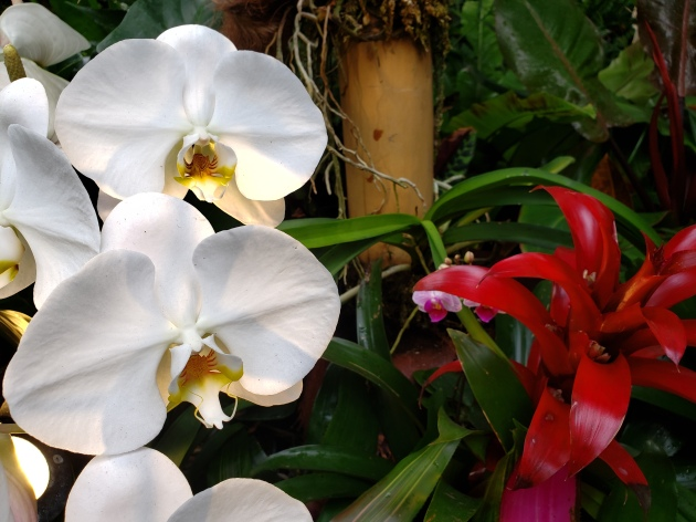 Phipps Orchids 5