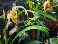 Phipps Orchids 6