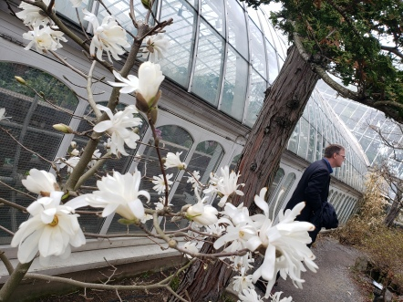 Phipps Star Magnolia Outside