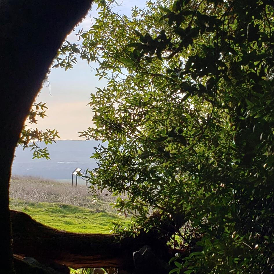 20200217 Umbrella Tree View West