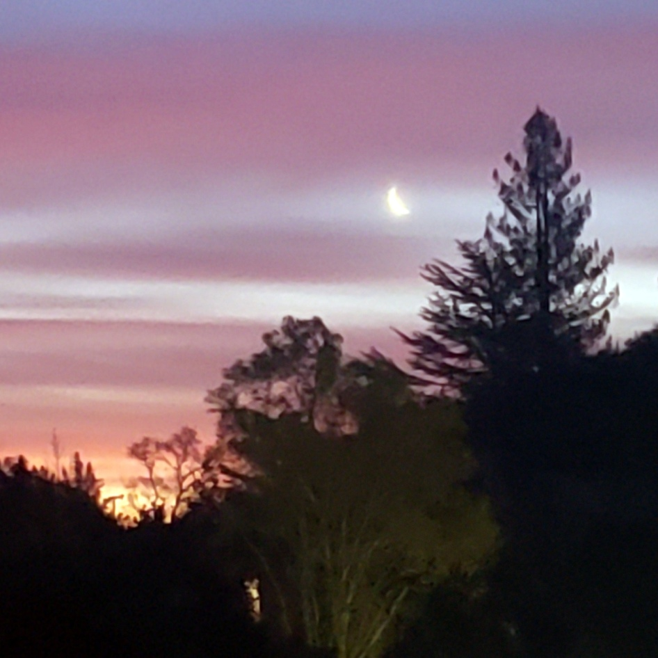 Moon & Trees at Sunrise
