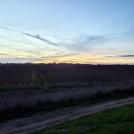 Sunset Balleto Vineyard at Laguna de SR