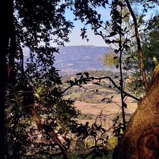 20200217 Umbrella Tree View East