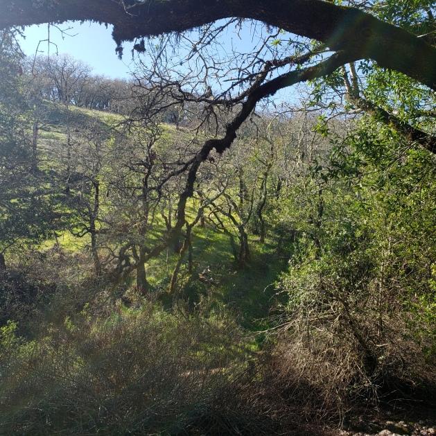 Annadel Heights Hill