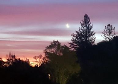 Moon & Trees at Sunrise