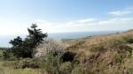 Jenner Headlands Preserve – Coastline & FloweringTree