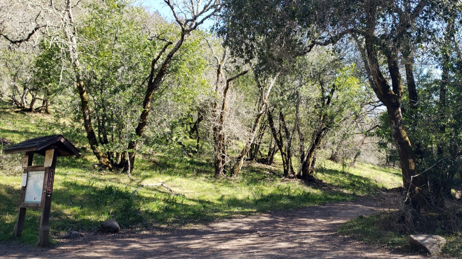 Junction Canyon & Spring Creek Trails