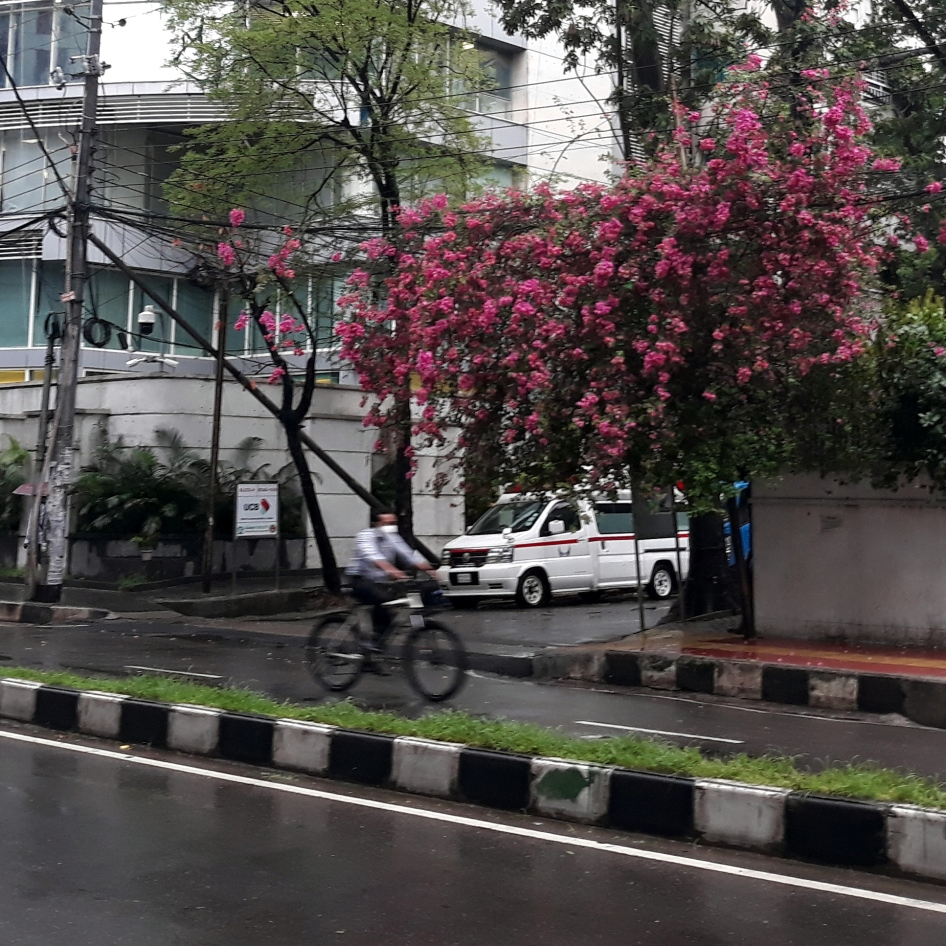 Rainy Day Bougainvillea