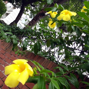 Yellow Flower & Brick Wall 2