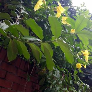 Yellow Flower & Brick Wall
