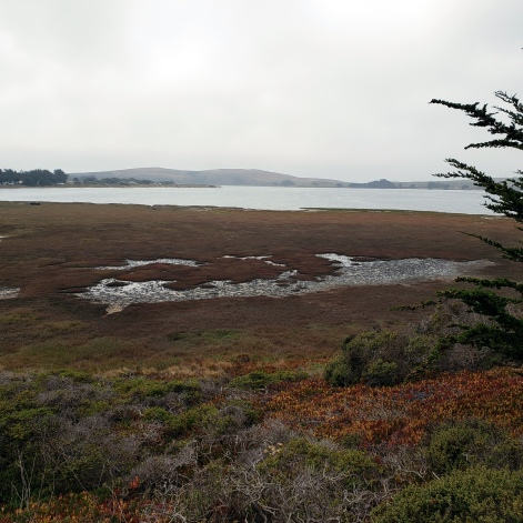 Bodega Bay & Head from Doran