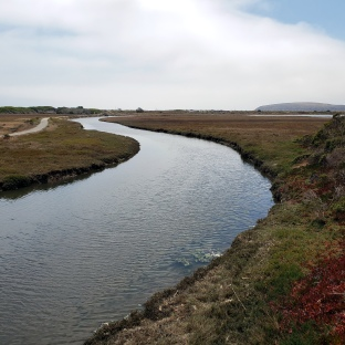 Bodega Doran Park wetlands 1