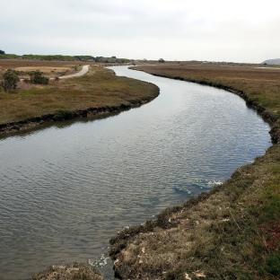 Bodega Doran Park wetlands 2