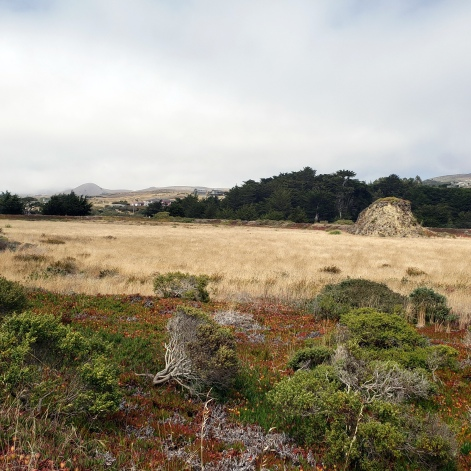 Doran Park Grass & Hills 2