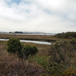 Doran Wetlands & Bodega Bay-Head