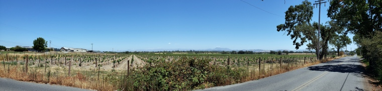 Vineyards & Mt St Helena Pano