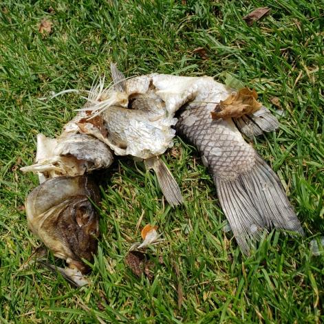 Death on the Lake 1