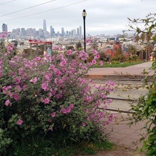 Flowers & Dolores Park Skyline