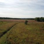 Lakeside Marshy Grassland1