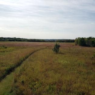 Lakeside Marshy Grassland 1