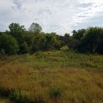 Lakeside Marshy Grassland2