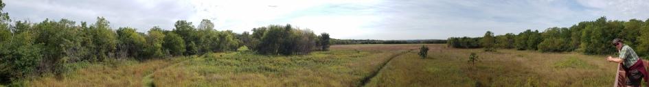 Lakeside Marshy Grassland Pano