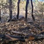 North-Annadell Post-Burn 20201021.1