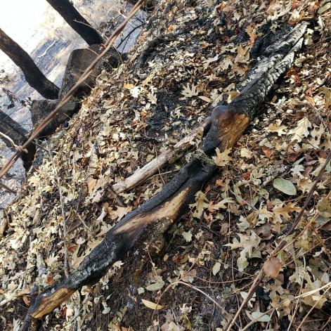North-Annadell Post-Burn 20201021.3