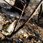 North-Annadell Post-Burn 20201021.4