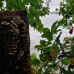 On the Lake Path 1