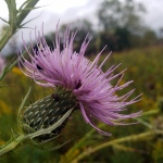Pollinators at Work3