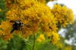 Pollinators at Work4