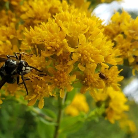 Pollinators at Work 4