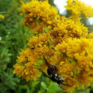 Pollinators at Work 5
