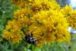 Pollinators at Work6