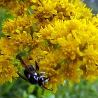Pollinators at Work 6