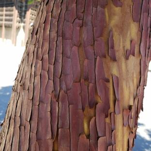 Textured Bark 2