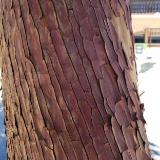 Textured Bark 3