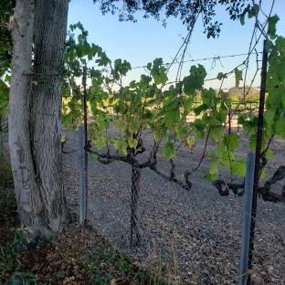 Vines & Trees 1