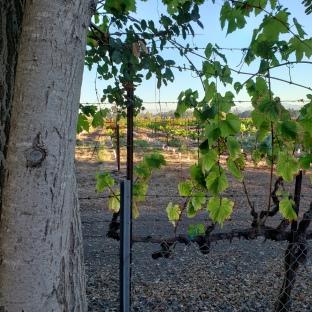 Vines & Trees 2
