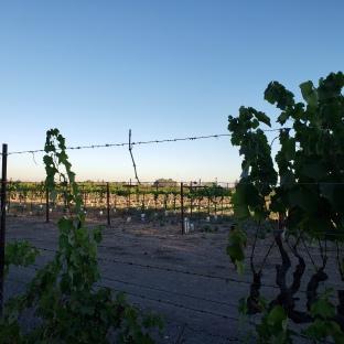 Vineyards & A Hot-Air Ballon