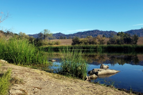 20201021 Spring Lake Reeds & Mayacamas
