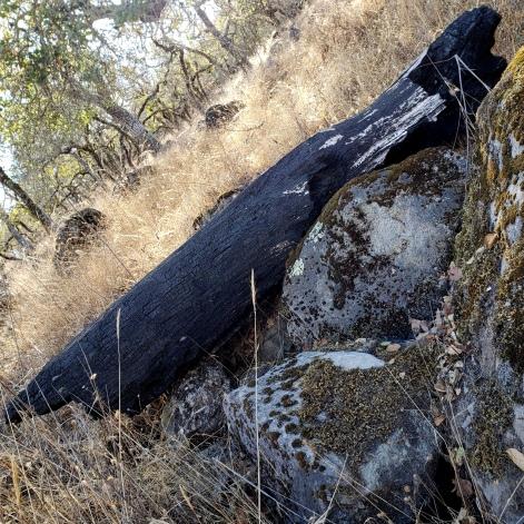 20201108 Annadel Burned Log - Nunns 2