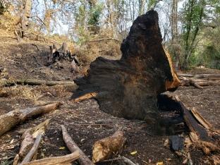 20201121 Sugarloaf Uprooted Base