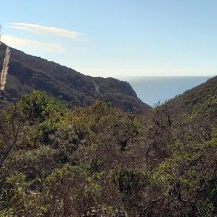 Coast Trail 1